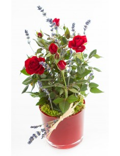 Red Rose Plant in Glass Vase