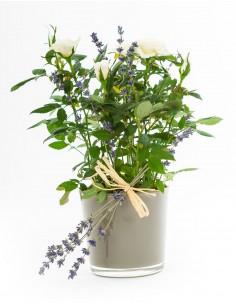 White Rose Plant in Glass Vase